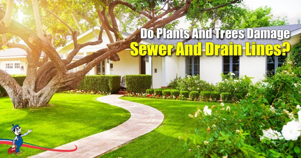 Do Plants And Trees Damage Sewer And Drain Lines?